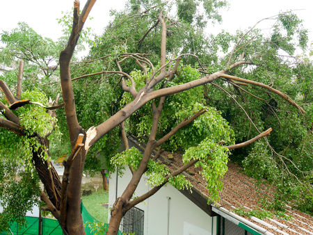 Photo for Fallen tree on the roof after big storm - Royalty Free Image