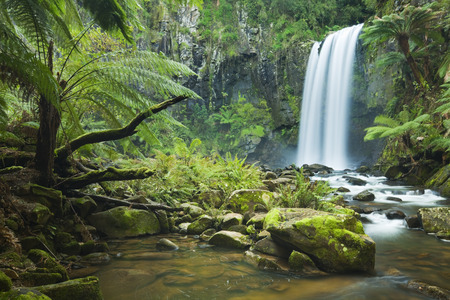 Photo for Waterfall in a lush rainforest. Photographed at the Hopetoun Falls in the Great Otway National Park in Victoria, Australia. - Royalty Free Image