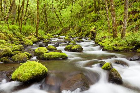 Photo for Gorton Creek through lush rainforest in the Columbia River Gorge, Oregon, USA. - Royalty Free Image