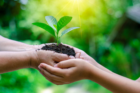 Photo pour Adults Baby Hand tree environment Earth Day In the hands of trees growing seedlings. Bokeh green Background Female hand holding tree on nature field grass Forest conservation concept - image libre de droit