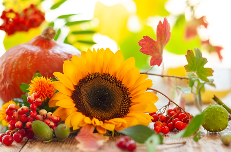 Photo pour Sunflower, pumpkin and autumn berries on the wooden table. - image libre de droit