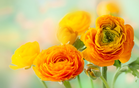 Foto de Floral arrangement with yellow ranunculus flowers. - Imagen libre de derechos