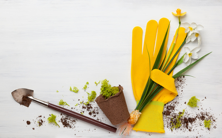 Photo pour Gardening concept  with spring flowers, garden tools,work gloves and flower pots on wooden background. Flat lay, copy space. - image libre de droit