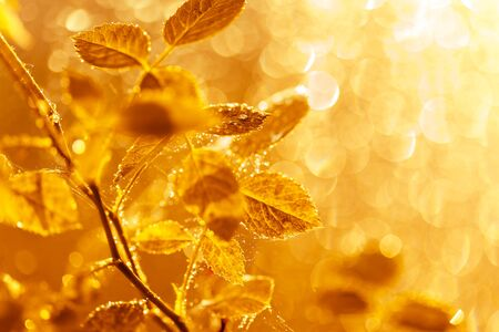 Photo pour Autumn leaves with water drops and spider web at sunset over blurred background. Soft focus, macro - image libre de droit