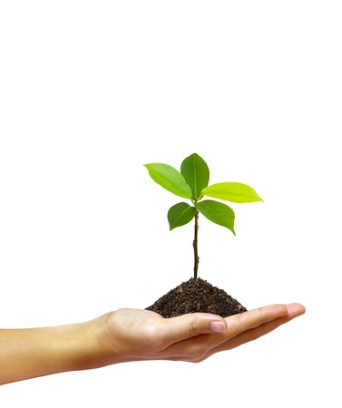 Photo pour Growing green seedling in a hand isolated on white background  - image libre de droit