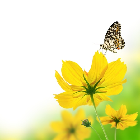 Beautiful yellow floral and butterfly