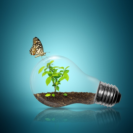 Foto de Bulb light with tree inside have butterfly on blue background  - Imagen libre de derechos