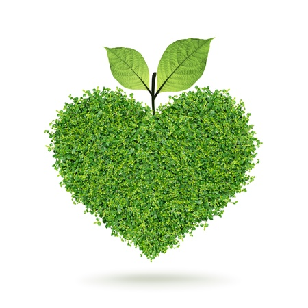 Photo for Small green plants heart and leaf in the happy Valentine - Royalty Free Image