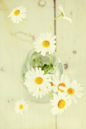 Bouquet of daisy in a glass jar