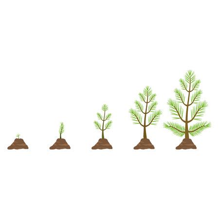 Illustration pour Growing pine tree - image libre de droit