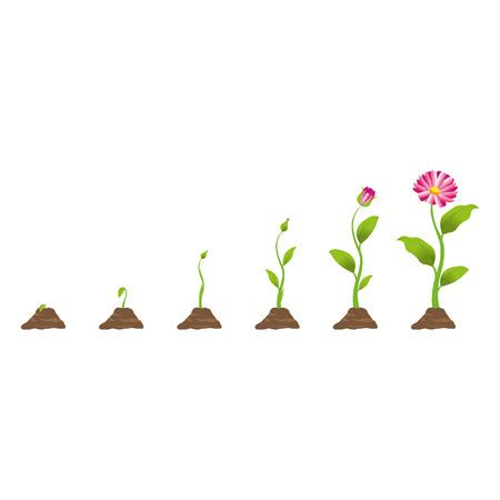 Ilustración de Growing plant in process - Imagen libre de derechos