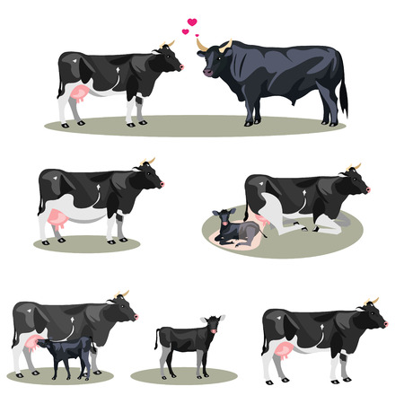 Illustration for Cow Life with all stages including birth - Royalty Free Image