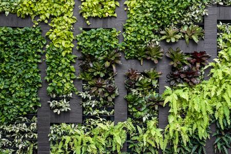 Foto de Green wall, eco friendly vertical garden - Imagen libre de derechos