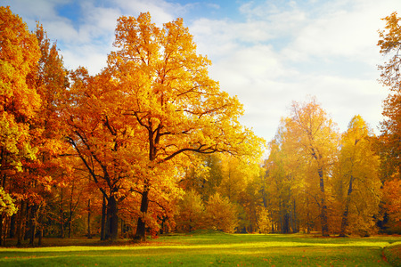 Photo pour Autumn landscape - image libre de droit