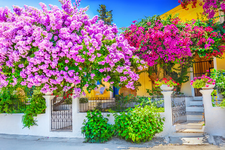 Photo for House with bougainvillea - Royalty Free Image