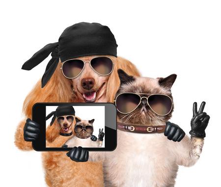Foto de dog with cat taking a selfie together with a smartphone - Imagen libre de derechos