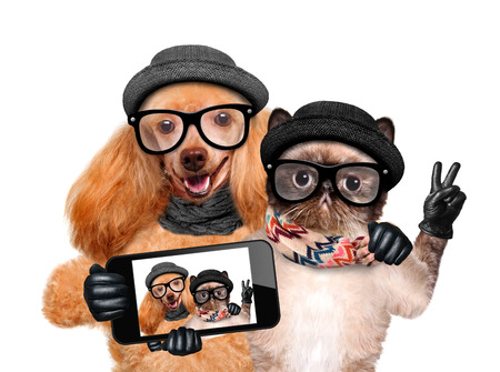 Photo pour Dog with cat taking a selfie together with a smartphone. - image libre de droit