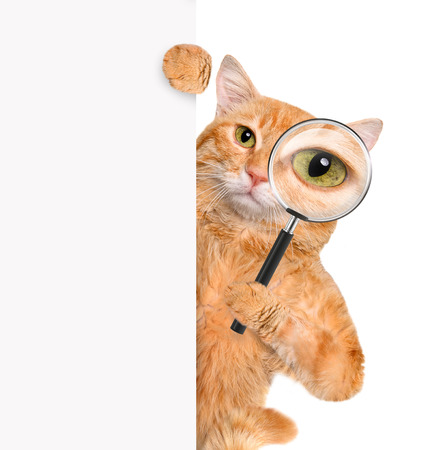 Photo for Cat with magnifying glass and searching - Royalty Free Image