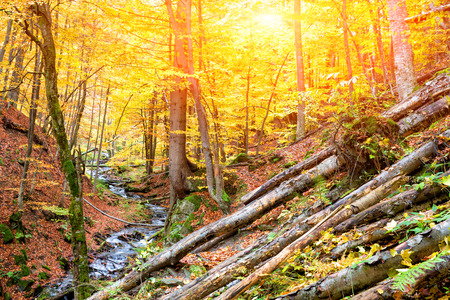 Photo for Autumn forest in the mountains - Royalty Free Image