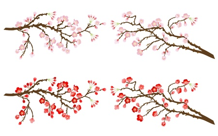 cherry and plum branches