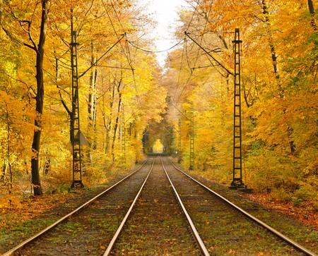 Railway in autumn forest