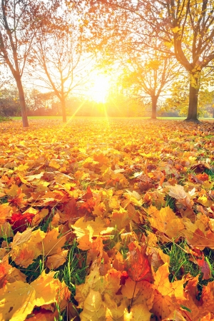 Photo pour Sunny autumn foliage - image libre de droit