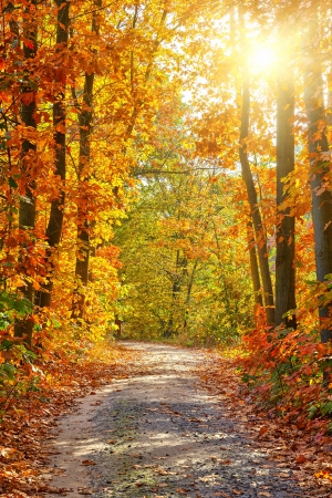 Photo pour Pathway in the autumn forest - image libre de droit
