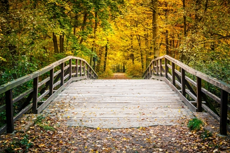 Photo for Wooden bridge in the autumn park - Royalty Free Image