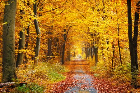 Photo pour Road in the autumn forest - image libre de droit