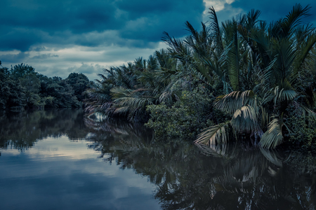 Photo for Scenic lagoon at night near Tangalle, Sri Lanka. Amazing view of the lagoon in rainforest. Mysterious river in the jungle at dusk. Beautiful tropical landscape. Water trip across the rain forest. - Royalty Free Image