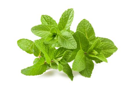 Photo for Fresh mint isolated on white background - Royalty Free Image