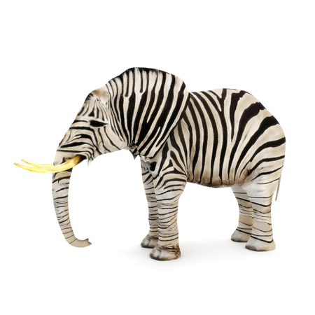 Photo pour Different, Elephant with zebra stripes on a white background  - image libre de droit