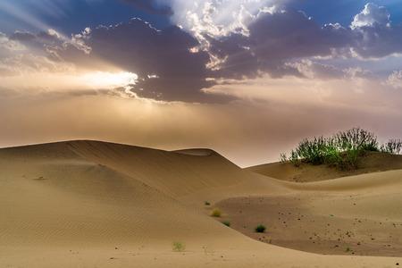 Photo for Camel Safari - Sand Dunes - Royalty Free Image