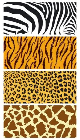Illustration for fur coat - Royalty Free Image