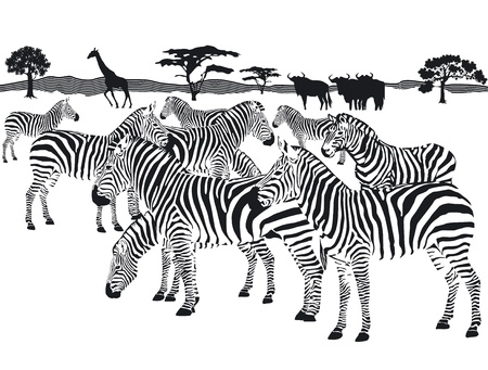 Illustration for herd of zebras - Royalty Free Image