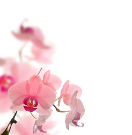 beautyfull flowers in white background