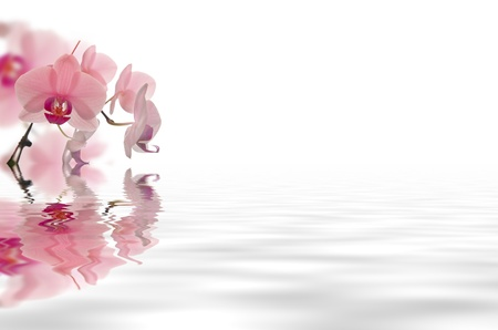 beautyfull flowers in white background floating in water