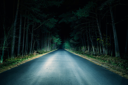 Photo for Night Road on dark forest. - Royalty Free Image