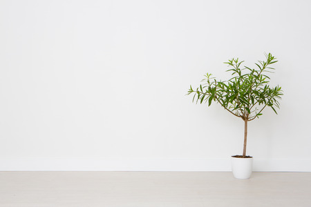 Foto de Flower in a pot on a white background. Empty space. - Imagen libre de derechos