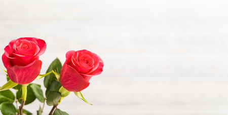 Foto de Valentines Day background. Two red roses on the white wooden background. - Imagen libre de derechos