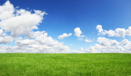 Beautiful green grass with blue sky in the background
