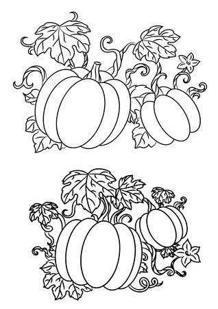 Ilustración de Black and white line drawings of pumpkins growing on trailing vines with leaves for halloween design, vector illustration isolated on white - Imagen libre de derechos