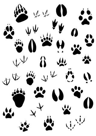 Ilustración de Big set of animal footprints include mammals and birds - Imagen libre de derechos
