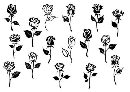 Illustration pour Black and white elegance roses flowers set for any floral design or love concept - image libre de droit