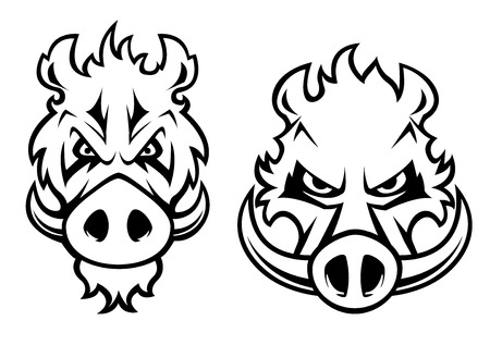 Illustration pour Wild boar heads with aggressive grin and big fangs isolated on white background  - image libre de droit