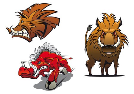 Illustrazione per Forest wild boars cartoon mascots showing red and brown angry pigs with ruffled fur and aggressive grin for tattoo or sport team symbol design - Immagini Royalty Free