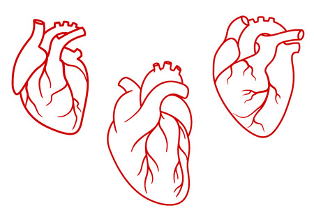 Ilustración de Red human hearts in outline style with aorta, veins and arteries isolated on white background. For cardiology or medical design - Imagen libre de derechos