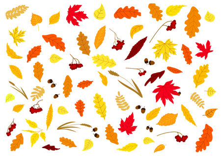 Illustration for Autumnal leaves, herbs, acorns and berries set isolated on white. For holiday and seasonal design - Royalty Free Image