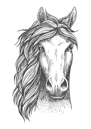Illustration for Beautiful arabian stallion sketch icon for horse breeding symbol, equestrian or riding club emblem design. Front view of a head of a purebred horse with alert ears - Royalty Free Image