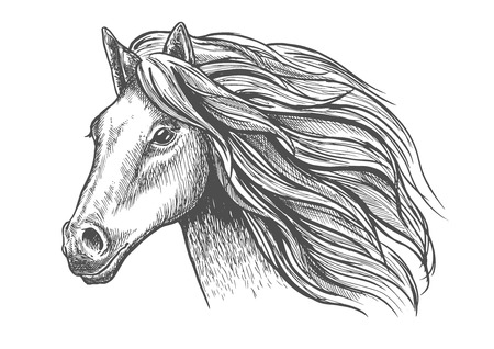 Illustration pour Mare or stallion young horse head sketch with eager look and bushy mane, thoughtful glance and beautiful neck. For fauna themes and wildlife symbol, mascot design or equestrian sport - image libre de droit